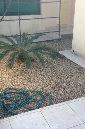 front_garden_after