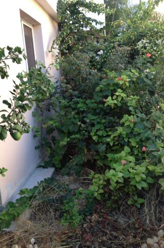 rear_garden_before