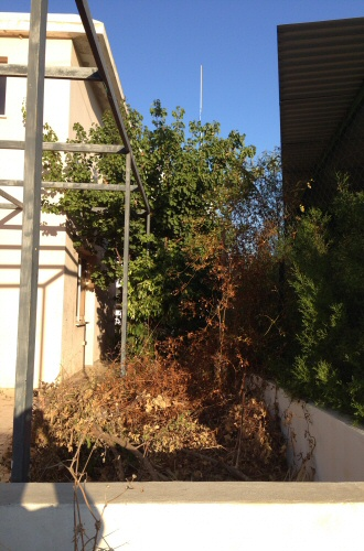 side_garden_before